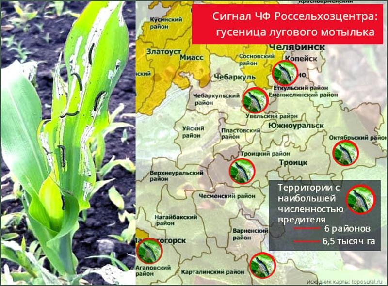 В районе обнаружен вредитель растений