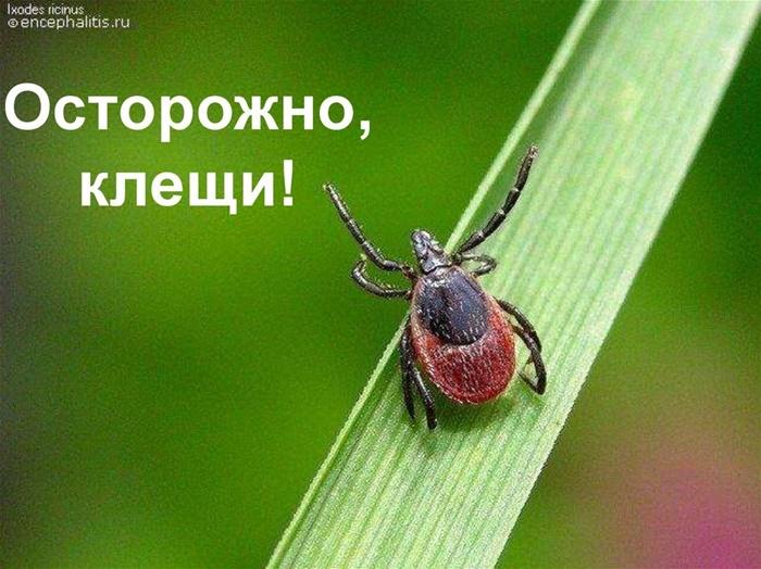 На Урале проснулись клещи