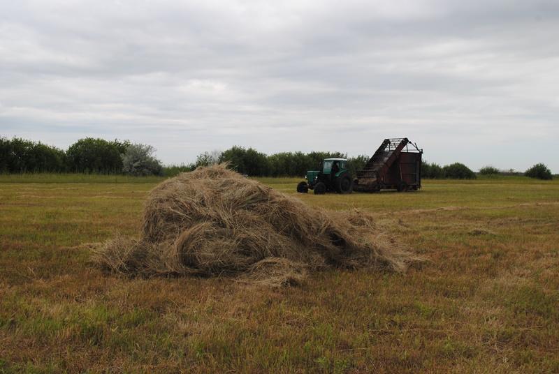 Как идет заготовка сена в личных подсобных хозяйствах?