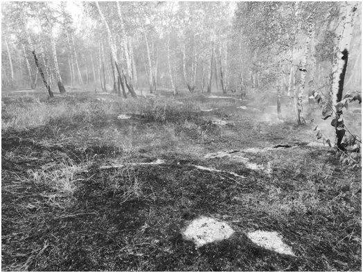 Ущерб от лесного пожара составил  более 400 тысяч рублей!